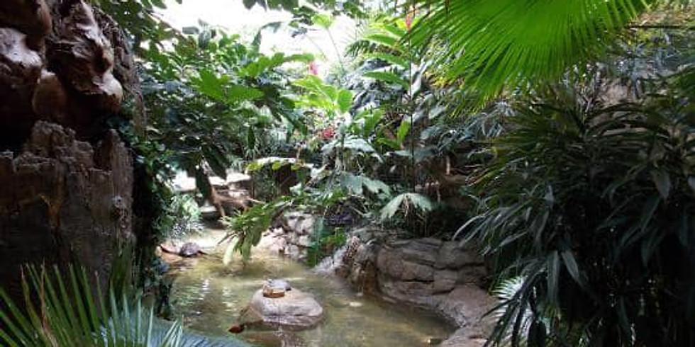Explore the Zoo Rainforest