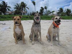 Lulu, Astro and Sasha