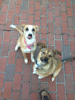 Piper [left] and Gracie [right]