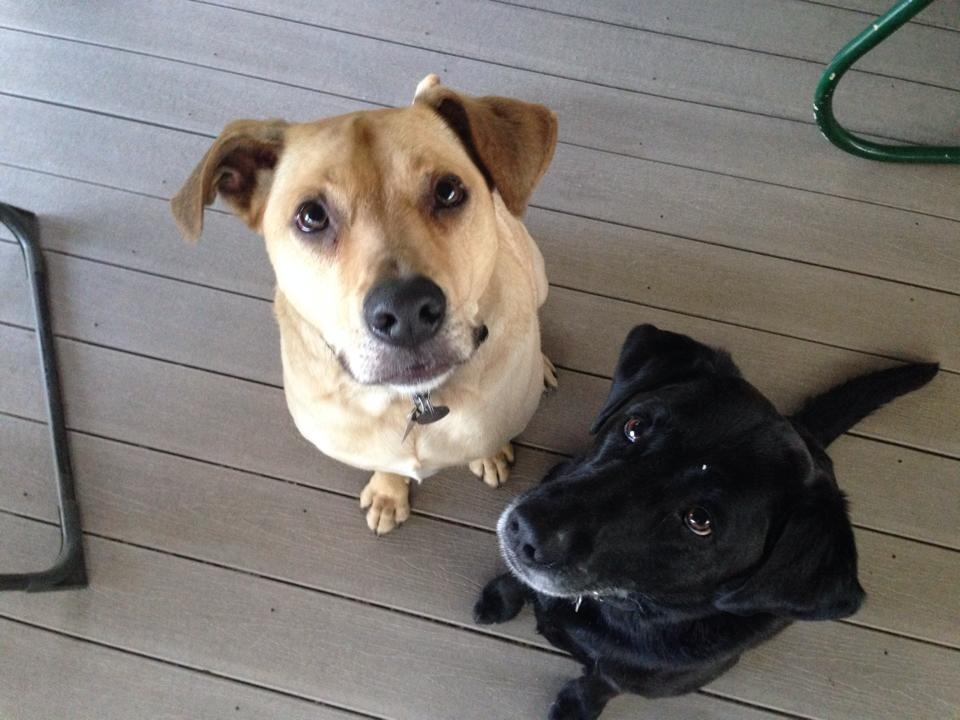 Oscar [left]