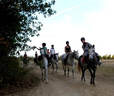 reprise équitation