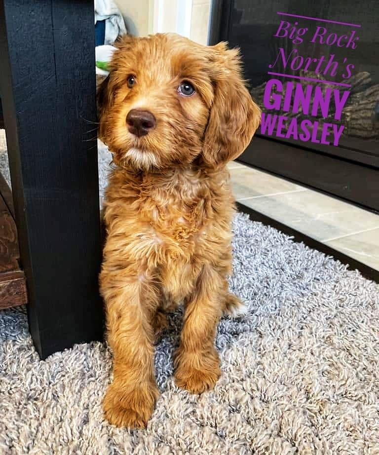 Ginny Weasley 10 weeks