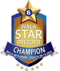Big Rock Champion Star Logo.png