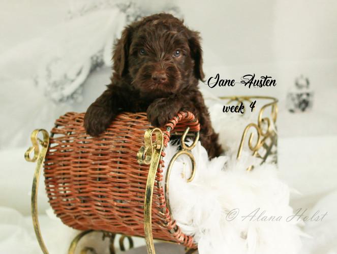 Jane Austen week 4-2.jpg