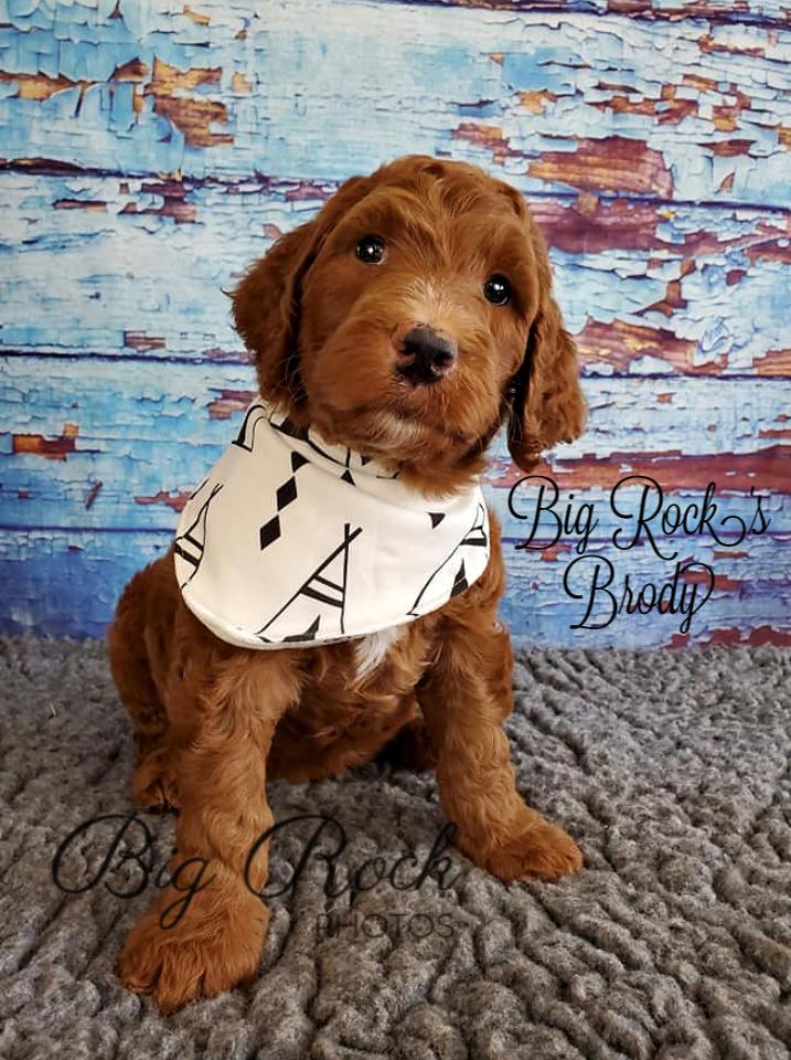 Brody 5 weeks