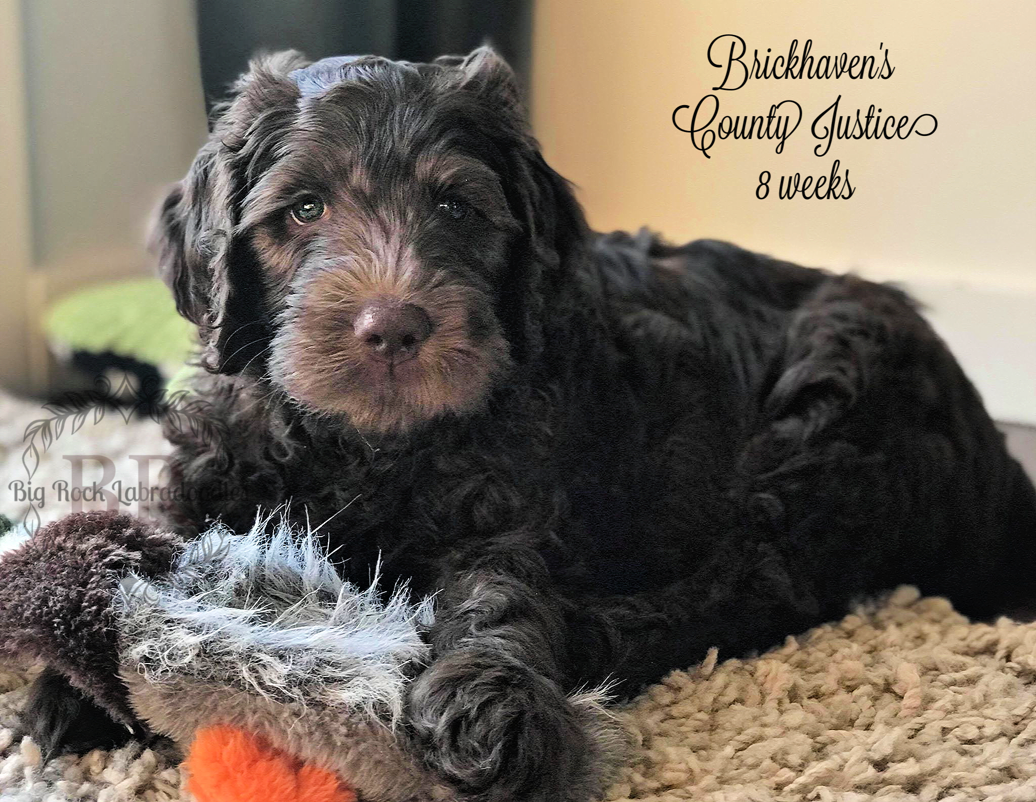 Brickhaven's County Justice 8 weeks