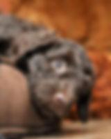 Big Rock Labradoodles | Testimonials | Alberta Labradoodle Breeder | Donna Treffers