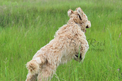 Lucy Running Away 8 months