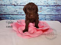 Violet 4 weeks