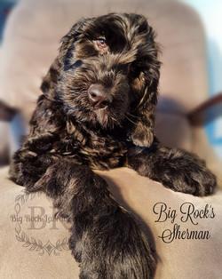 Sherman 11 weeks a