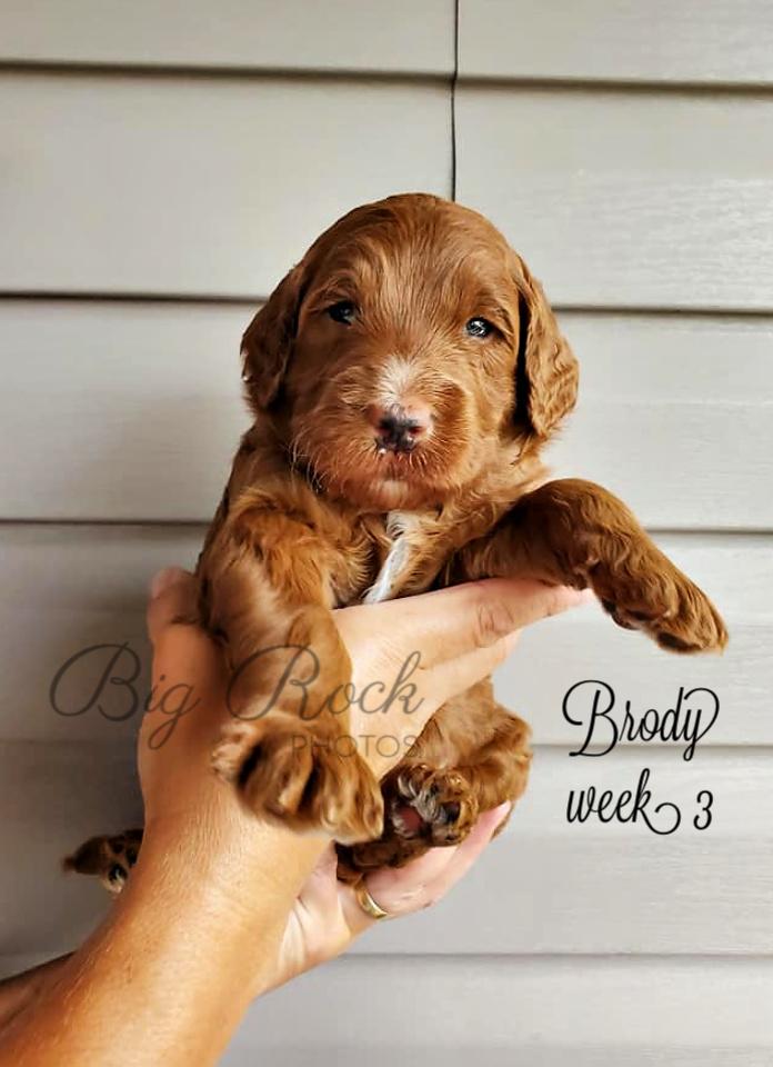 Brody week 3