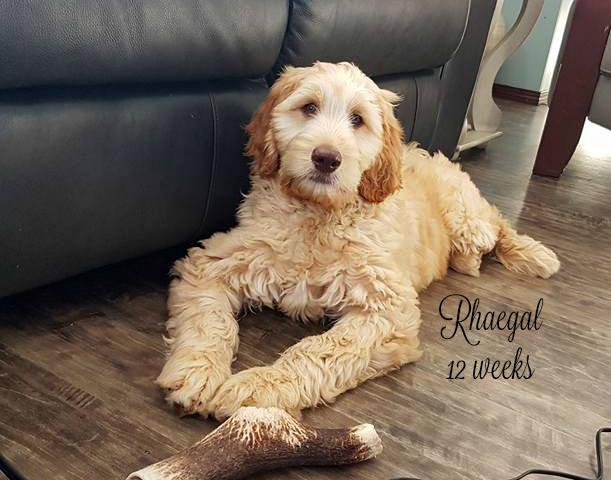 Rhaegal 12 weeks