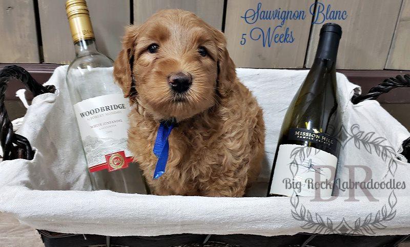 Sauvignon Blanc 5 weeks