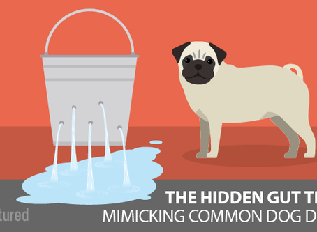 Dysbiosis: Does Your Dog Have Leaky Gut?