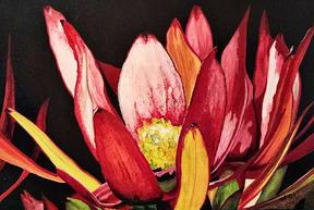 Leucadendron by Alana Holst