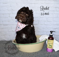 Roxy in bowl tub 3.5 mos