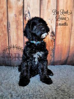 Lorina 3 months b
