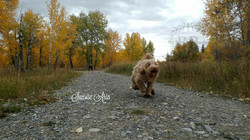 Aria October 2017 running with full coat watermarked