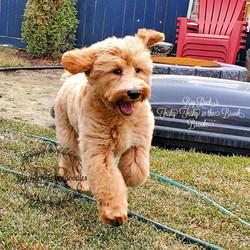 Brooke 4.5 months