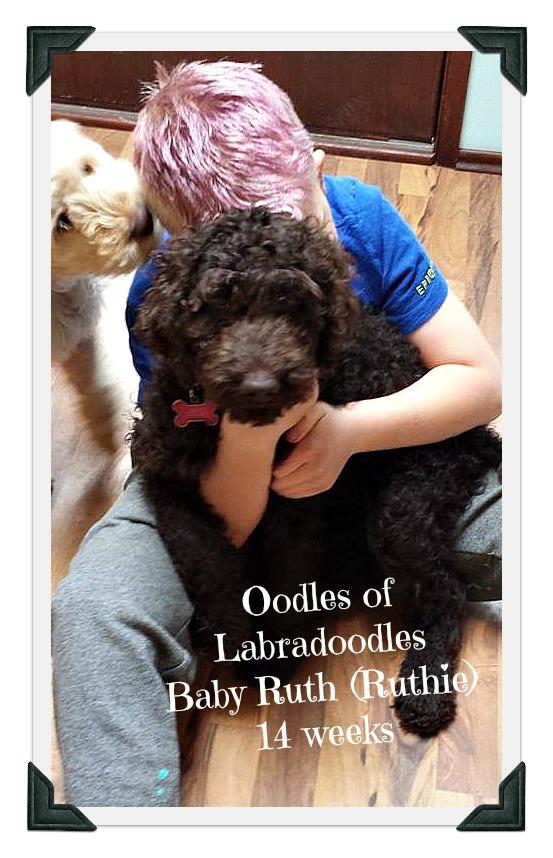 Baby Ruth (Ruthie) 14 weeks