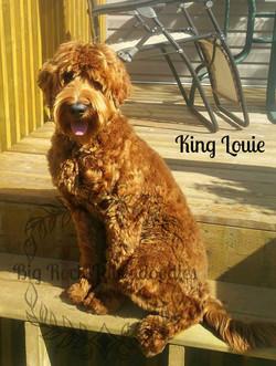 Louie-with-first-hair-cut-5
