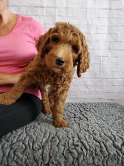 Brody 8 weeks 1