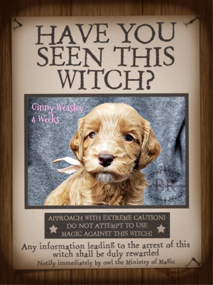 Ginny Weasley week 4