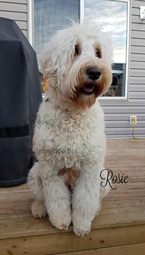 Rosie age 2.5 d