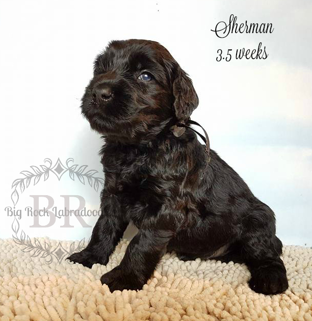 Sherman 3 weeks 3 days
