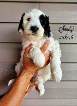 Sandy week 6