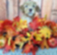 Big Rock Labradoodles | Testimonials | Adam Mansbridge | Schwepp | At Week 6