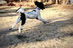 Lexi running
