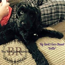 Nellie 9 weeks