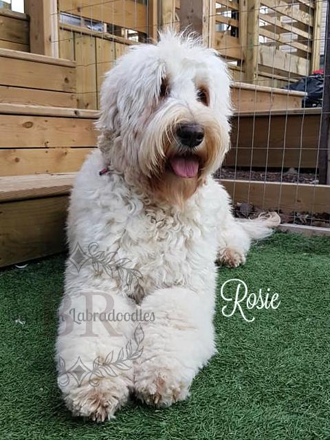 Rosie age 2.5 b