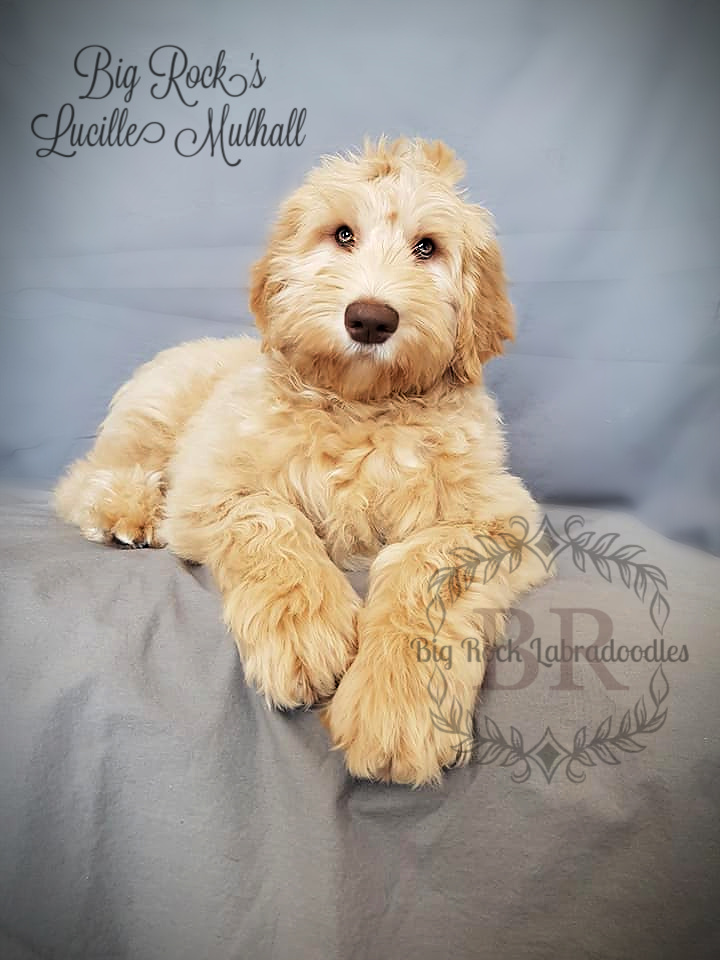 Lucille Mulhall 4 months b