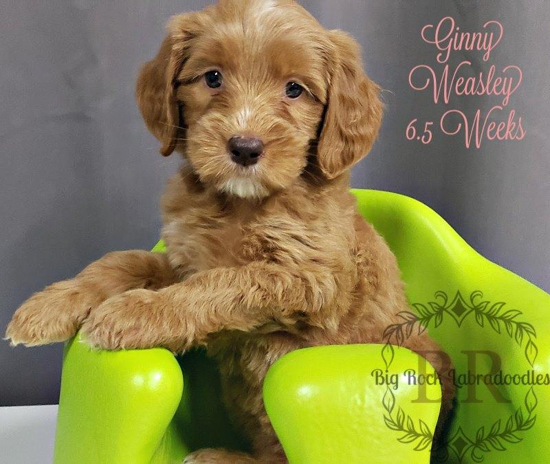 Ginny Weasley week 6.5