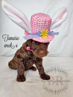 Tamarin week 4