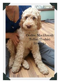 Toshie 14 weeks