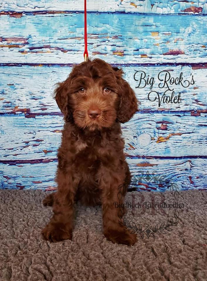 Violet 9 weeks