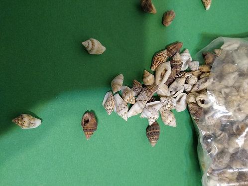 Small sea shells