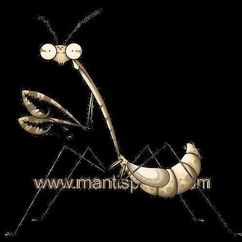 Euchomenella heteroptra