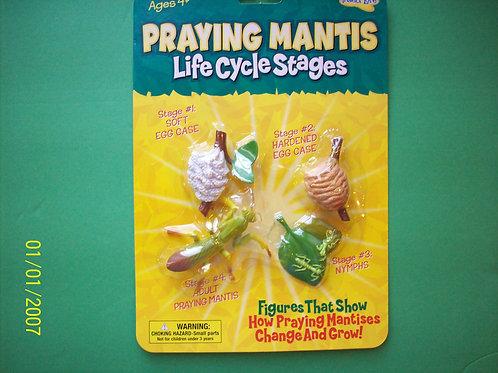 Praying mantis life cycle