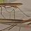 Thumbnail: Tenodera Aridifolia Sinensis nymphs