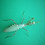 Thumbnail: Sphodromantis viridis