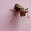 Thumbnail: Sphodropoda quinquedens