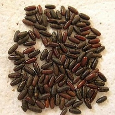 False stable fly & Mealworm Combo (large)
