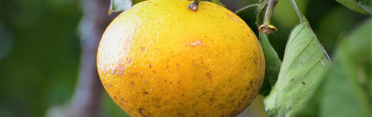 Orange JPG (2).jpg
