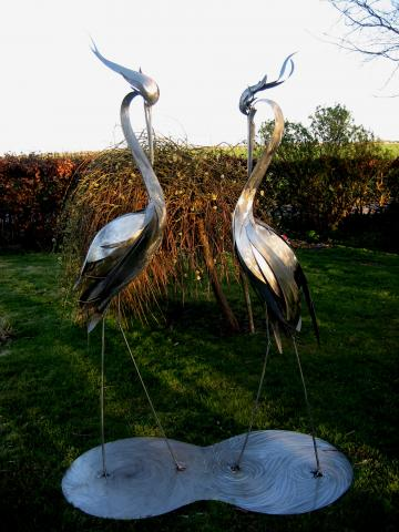 Courting Herons