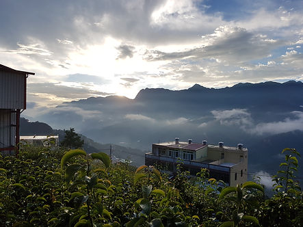 Yang Tea Chile Li Shan Taiwan