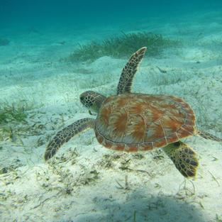 Enjoy snorkeling and see turtles.